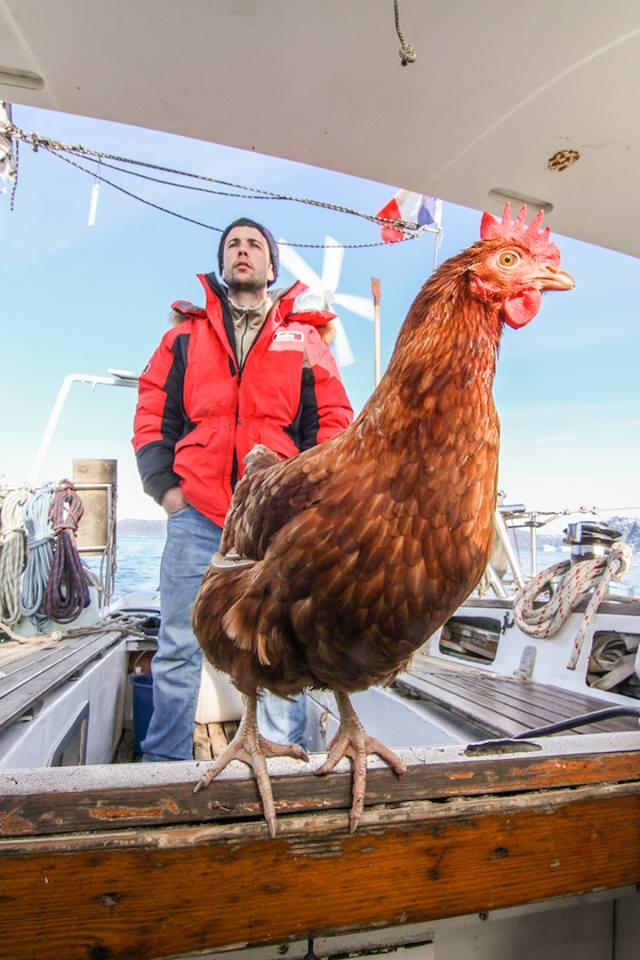 Huhn auf dem Boot