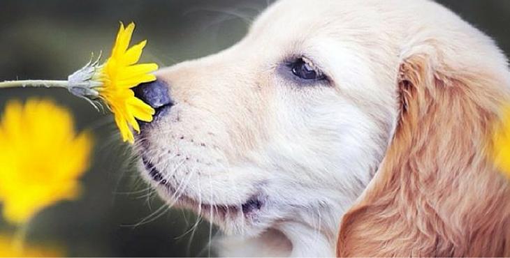 dog-hayfever-tips-cover