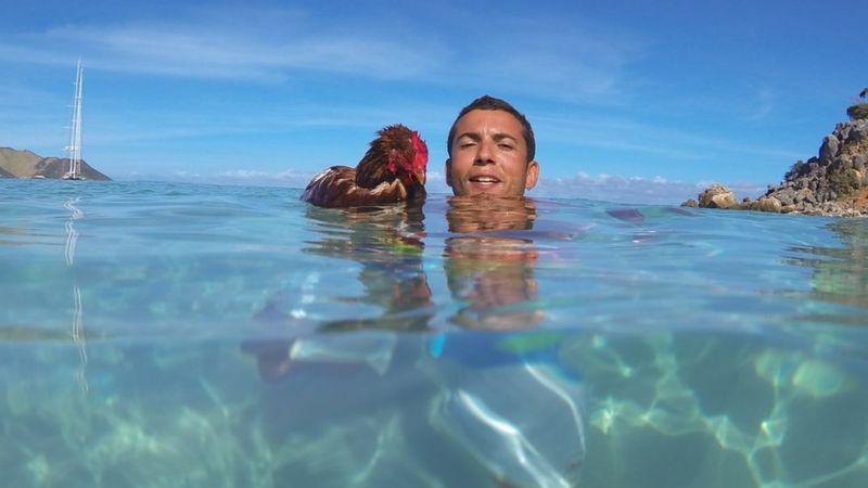schwimmendes huhn