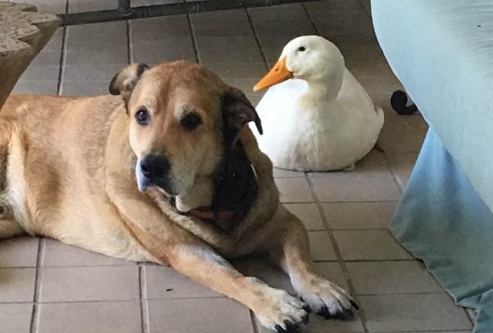 Hund und Ente