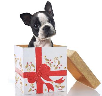dog-present_105264224