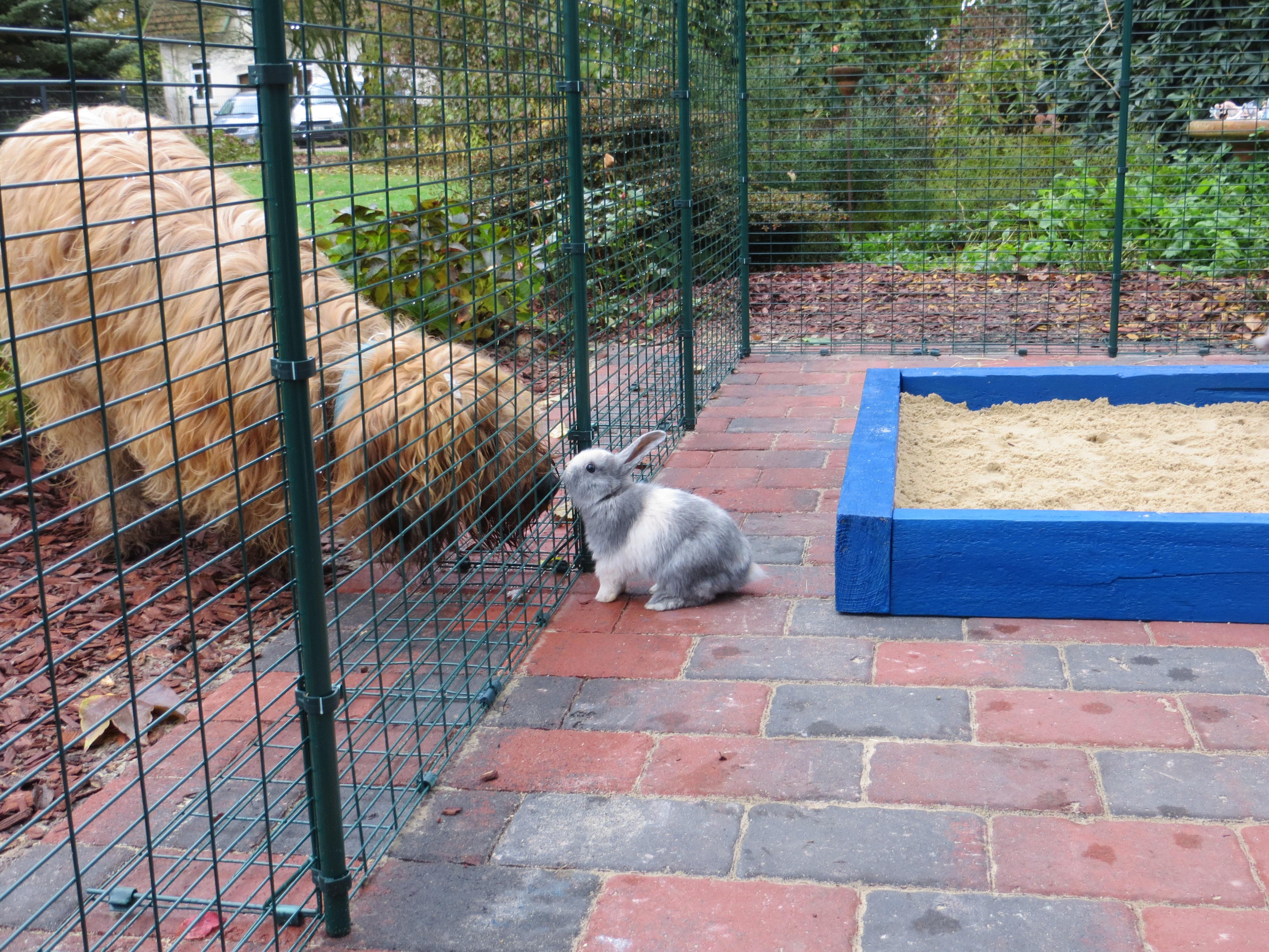 Hund & Kaninchen können sich kennenlernen
