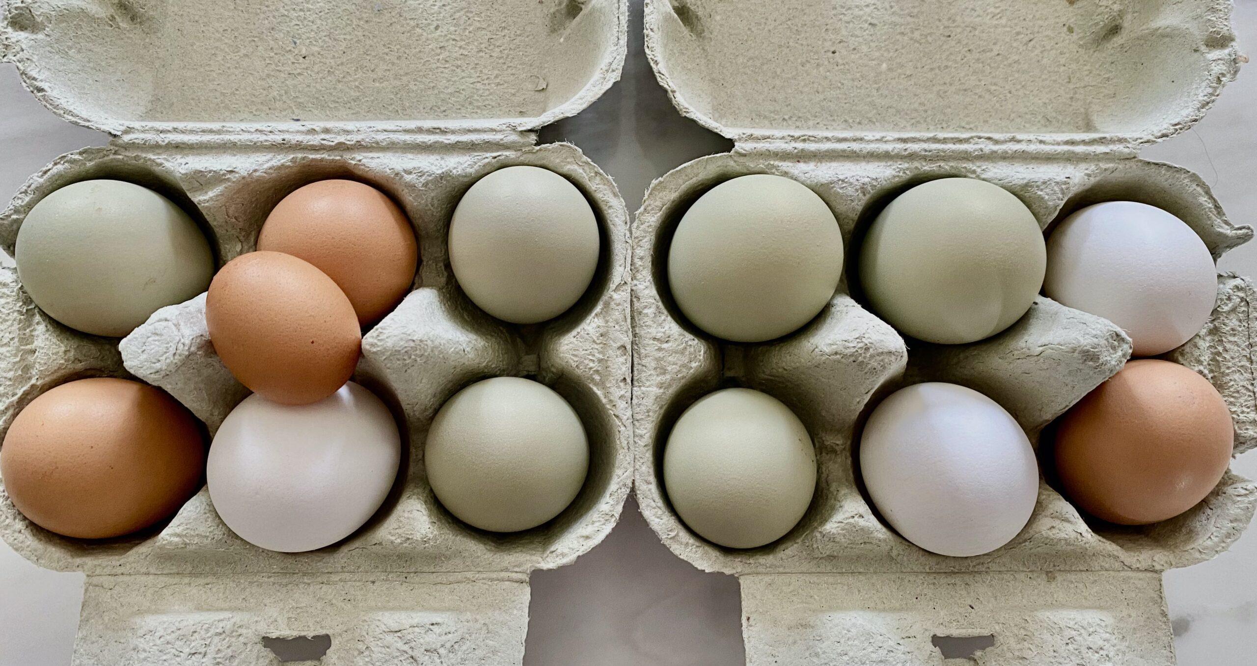 Eier in Eierkartons
