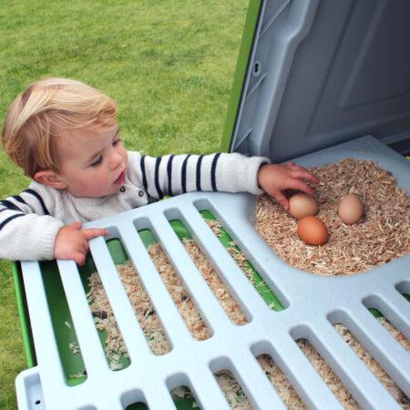 Ein Junge holt Eier aus einem Eglu Hühnerstall