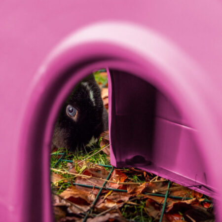 Ein blauäugiges Kaninchen sieht durch einen Zippi Unterschlupf hindurch