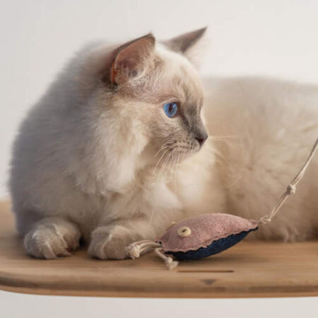 Katze spielt mit einem Spielzeug in Form einer Qualle