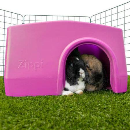 Zwei Kaninchen verstecken sich in einem lila Unterschlupf in einem Auslauf.