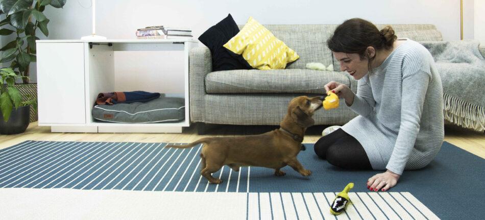 Ein Dackel spielt mit seinem Besitzer im Haus, mit einem Fido Nook Hundebett im Hintergrund