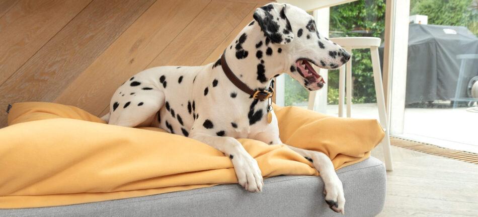 Ein Dalmatiner auf einem Sitzsack-Topper auf einem Topology Hundebett