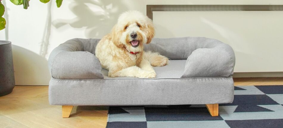 Ein Goldendoodle ruht sich auf einem grauen Polsterbett aus