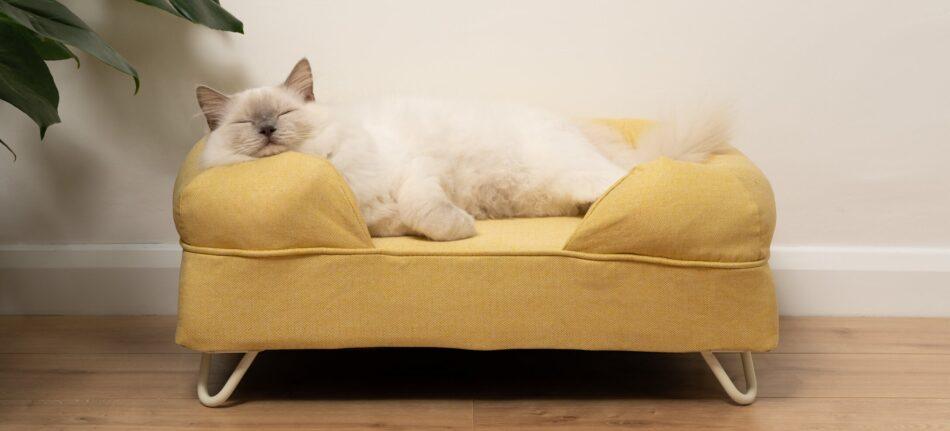 Eine Ragdoll Katze schläft auf einem gelben Polsterbett für Katzen