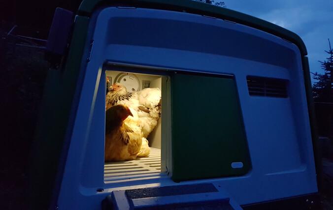 Hühner nachts im Eglu Hühnerstall