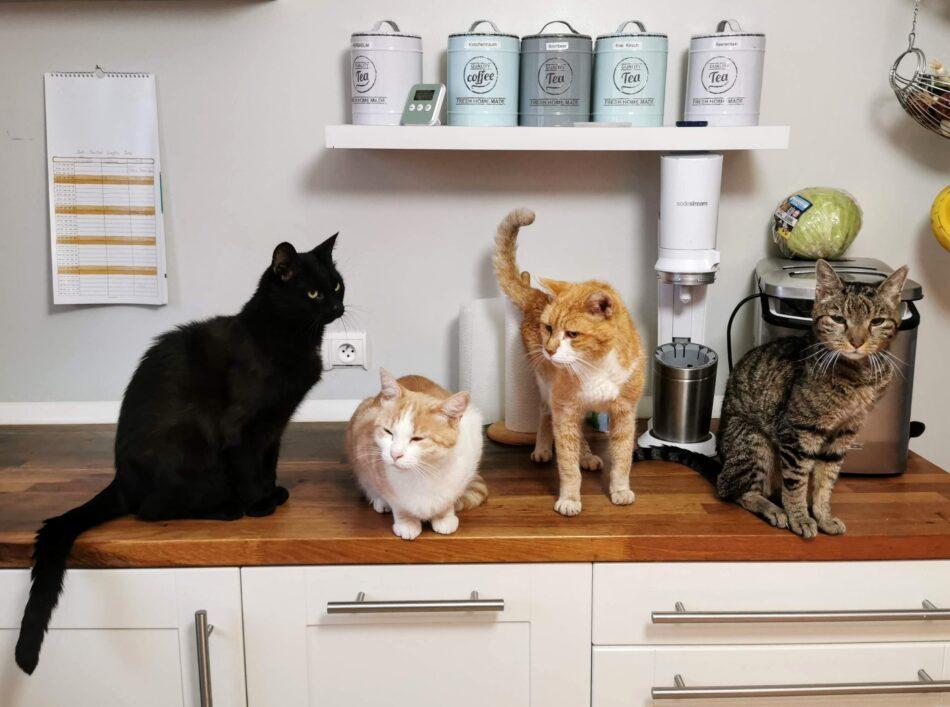 Vier Katzen sitzen zusammen auf einer Küchenarbeitsplatte