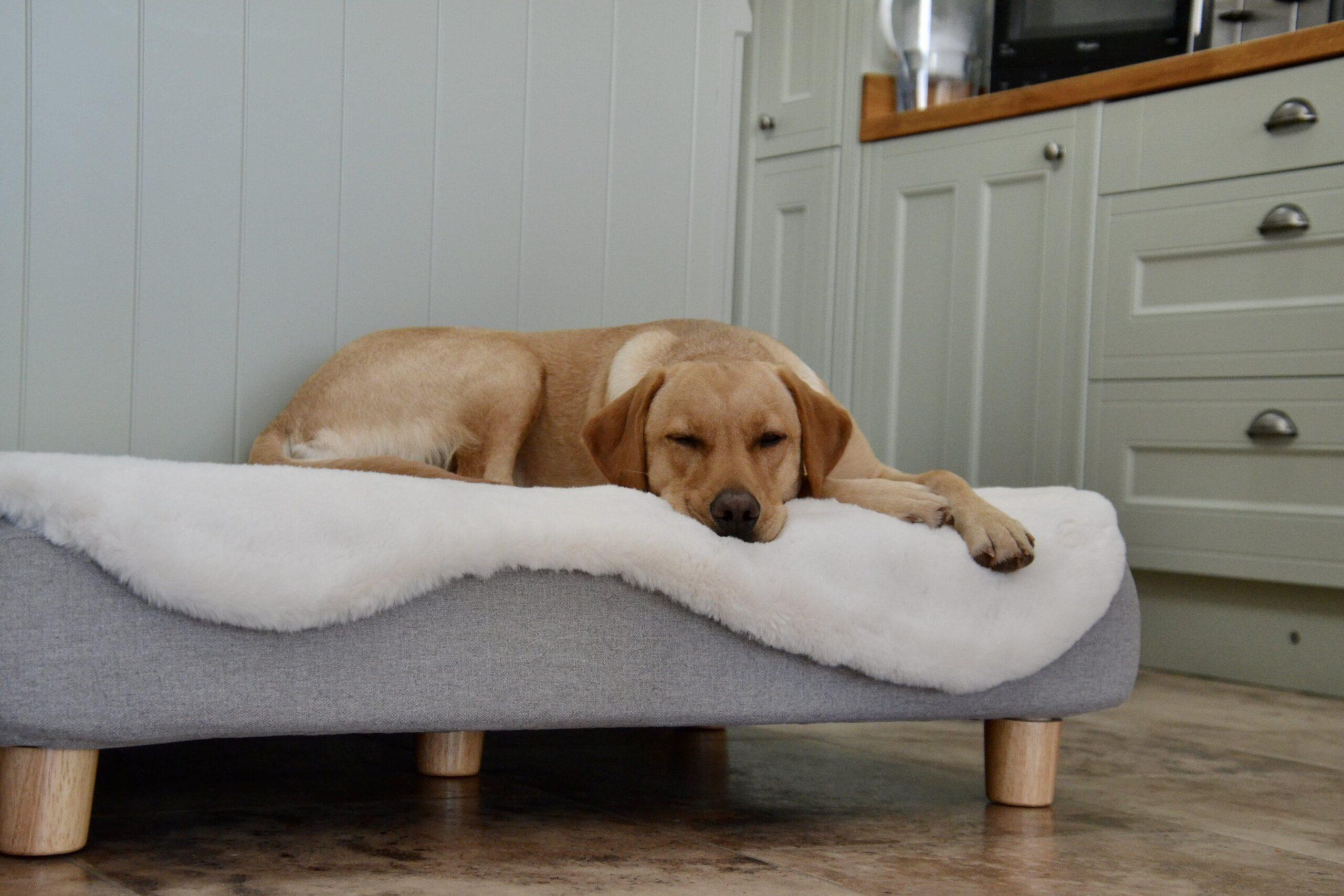 Ein Labrador liegt auf einem Topology Bett