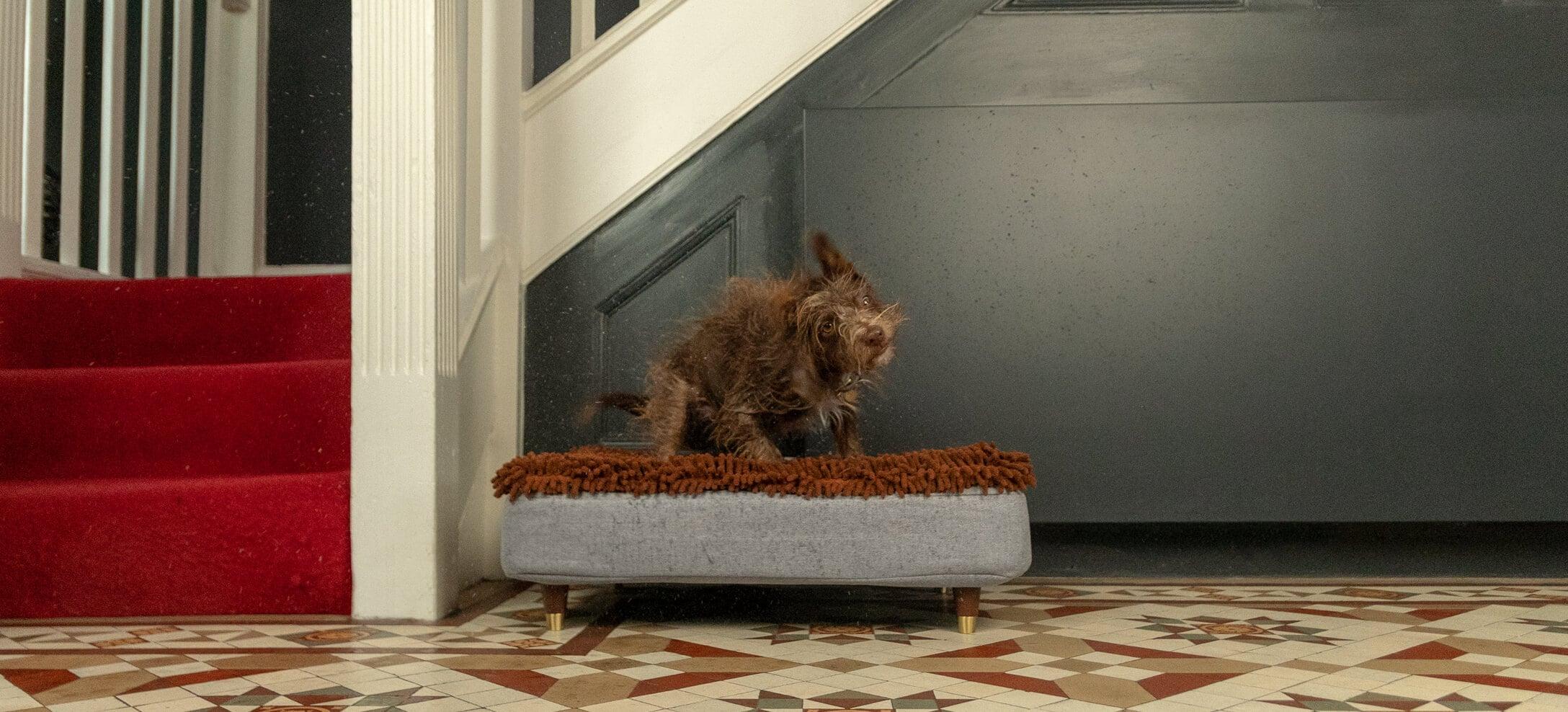 Ein brauner Hund schüttelt sich auf einem Topology Bett trocken.