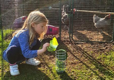 Hühnerhaltung im Herbst, den Leckerbissen Halter füllen
